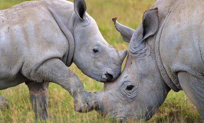 blog_yummypets_way_to_save_our_rhinos_02_09_2015