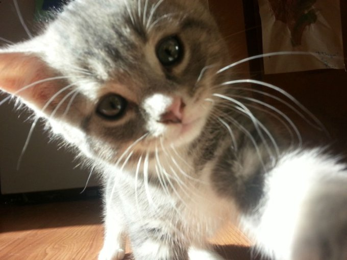 blog_yummypets_animal_selfies_19_10_2015