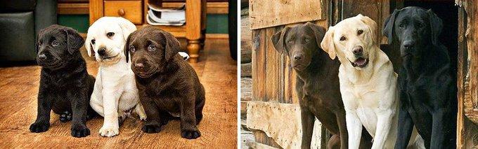 blog_yummypets_avant_apres_evolution_chiens_02_10_2015