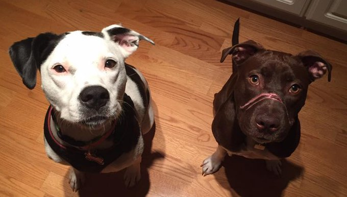 blog_yummypets_caitlyn_chien_3_10_2015