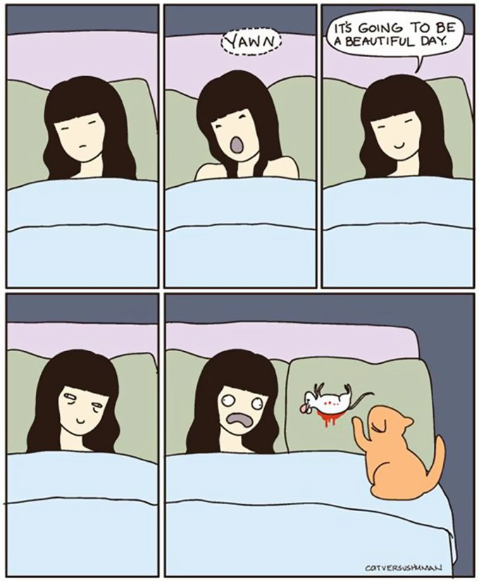 blog_yummypets_the_reality_of_living_with_cats_03_10_2015