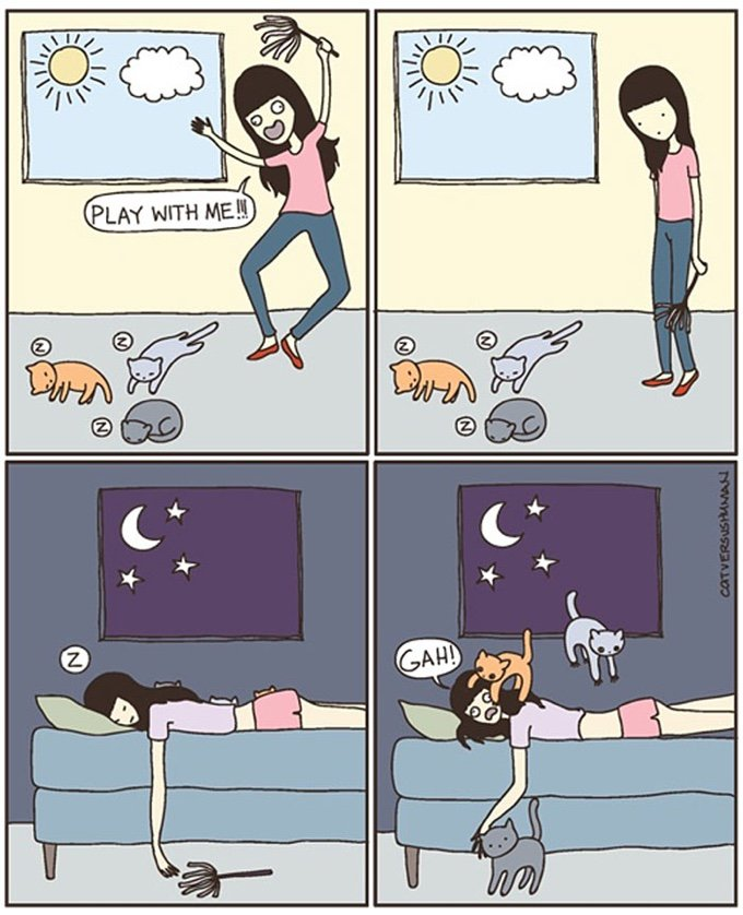 blog_yummypets_the_reality_of_living_with_cats_04_10_2015