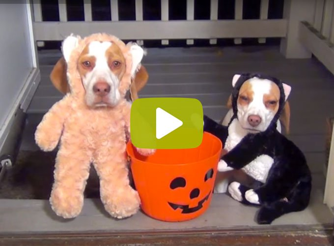 blog_yummypets_video_chiens_costume_bonbon_10_2015