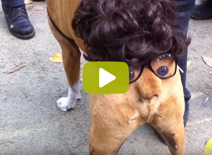 blog_yummypets_video_déguisement_chien_10_2015