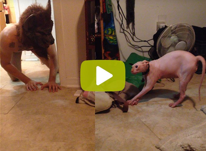 blog_yummypets_video_gollum_chat_halloween_10_2015
