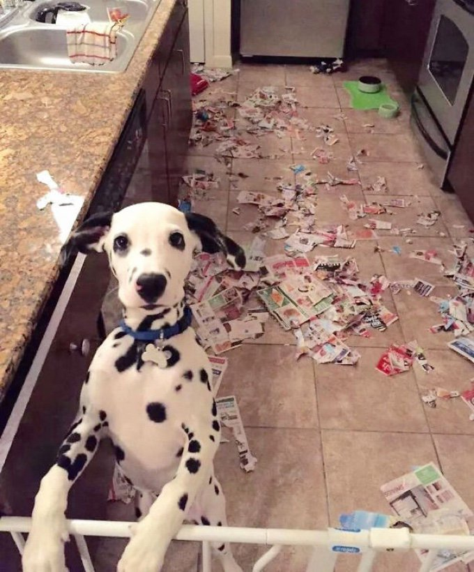 blog_yummypets_whe_your_pet_destroys_your_home_04_10_2015