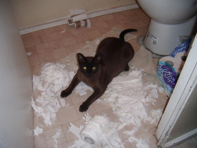 blog_yummypets_whe_your_pet_destroys_your_home_05_10_2015