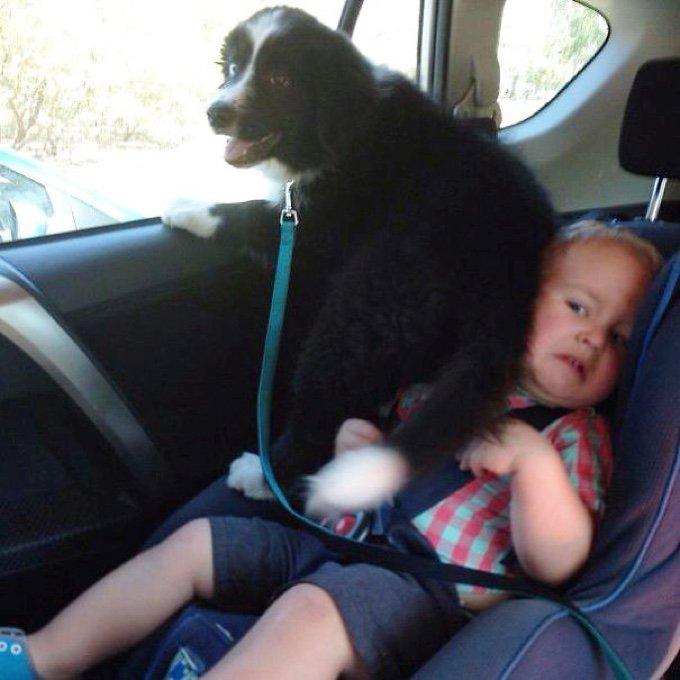 blog_yummypets_10_chiens_qui_n_ont_pas_compris_la_notion_d_espace_personnel_08_11_2015