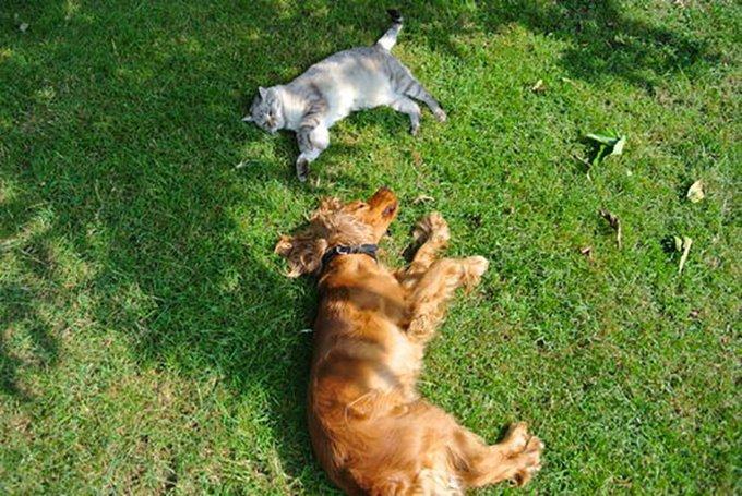 chien et chat allongés sur l'herbe