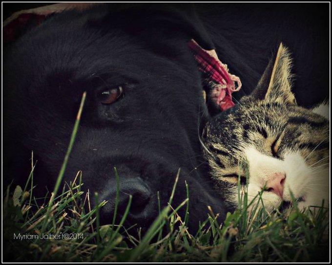 chien et chat font la sieste 2