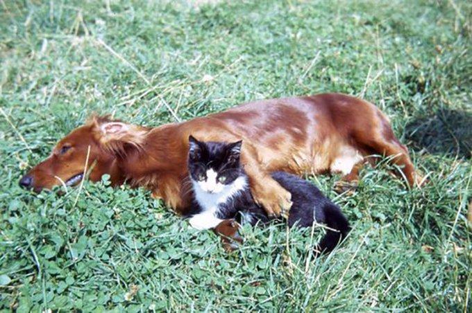 cocker et son chat allongés sur l'herbe