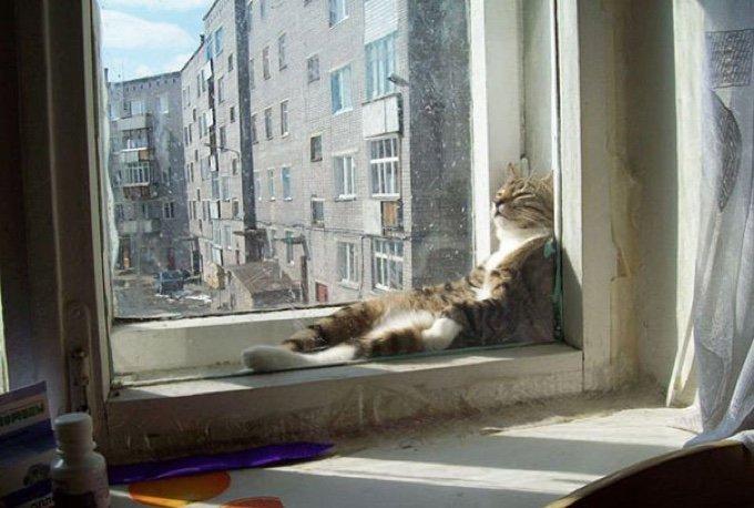 blog_yummypets_ces_animaux_qui_adorent_la_chaleur_03_11_2015