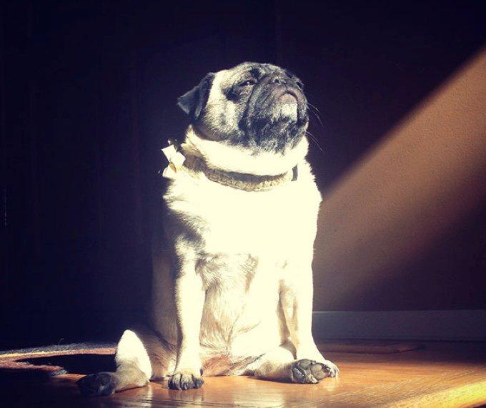 blog_yummypets_ces_animaux_qui_adorent_la_chaleur_05_11_2015