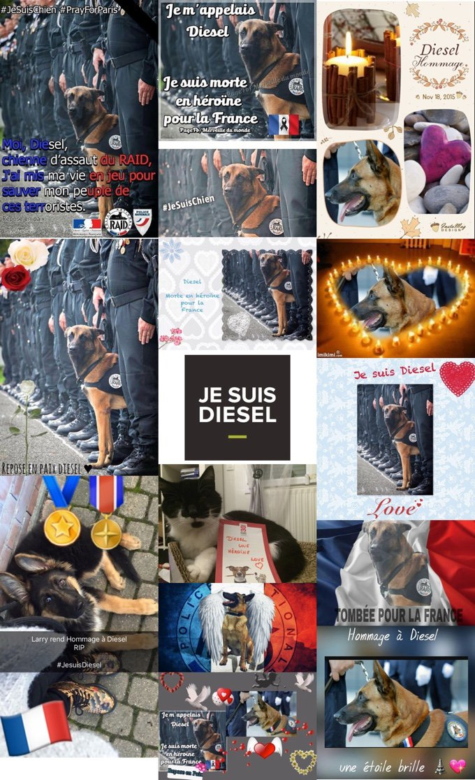 blog_yummypets_les_hommages_pour_diesel_se_multiplient_07_11_2015