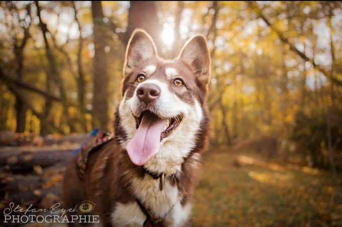 blog_yummypets_mon_animal_adore_lautomne_1_11_2015
