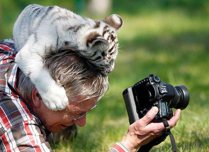 blog_yummypets_photographe_animalier_17_11_2015