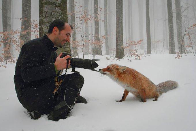 blog_yummypets_photographe_animalier_1_11_2015