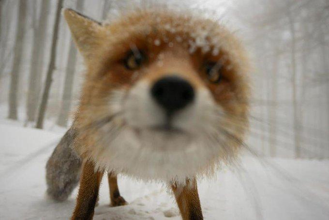 blog_yummypets_photographe_animalier_2_11_2015
