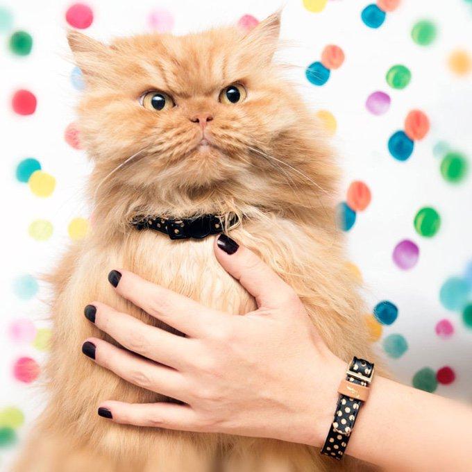 blog_yummypets_un_collier_et_un_bracelet_assortis_pour_votre_animal_et_vous_03_11_2015