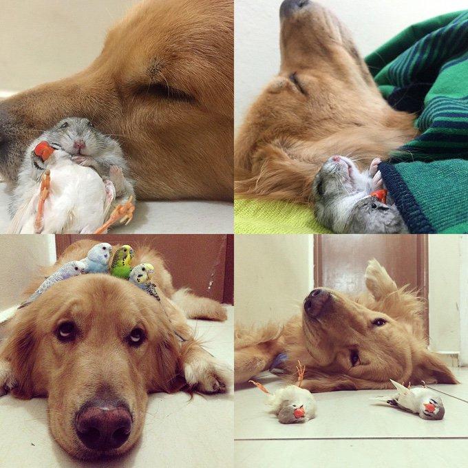 blog_yummypets_une_incroyable_famille_d_animaux_fait_le_buzz_02_11_2015