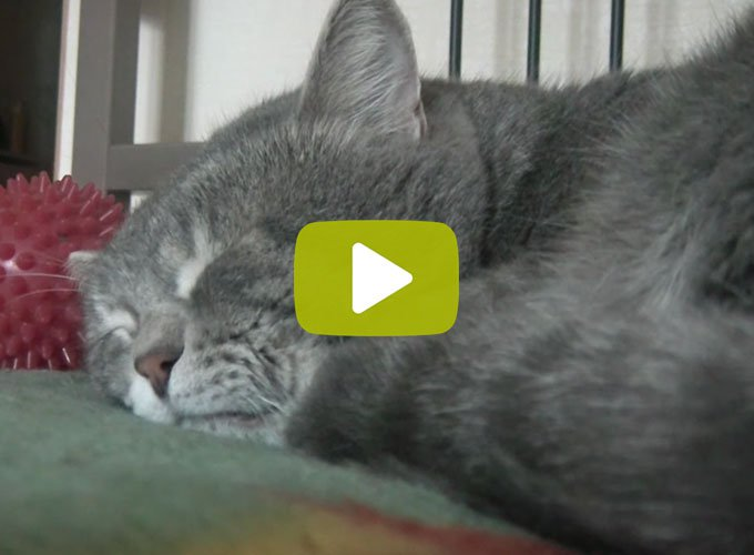 blog_yummypets_video_chat_maitre_tousse_10_2015