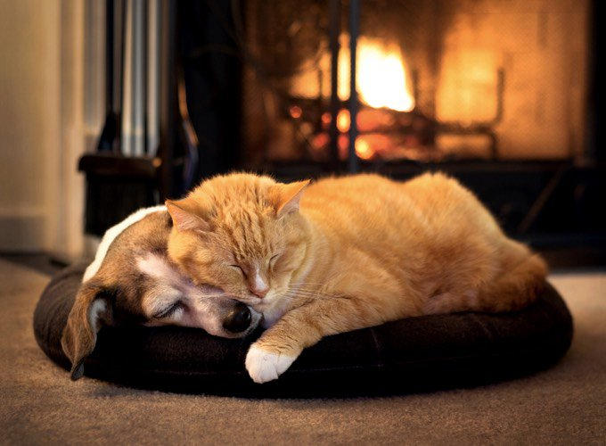Cohabitation chien chat : endormis devant la cheminée