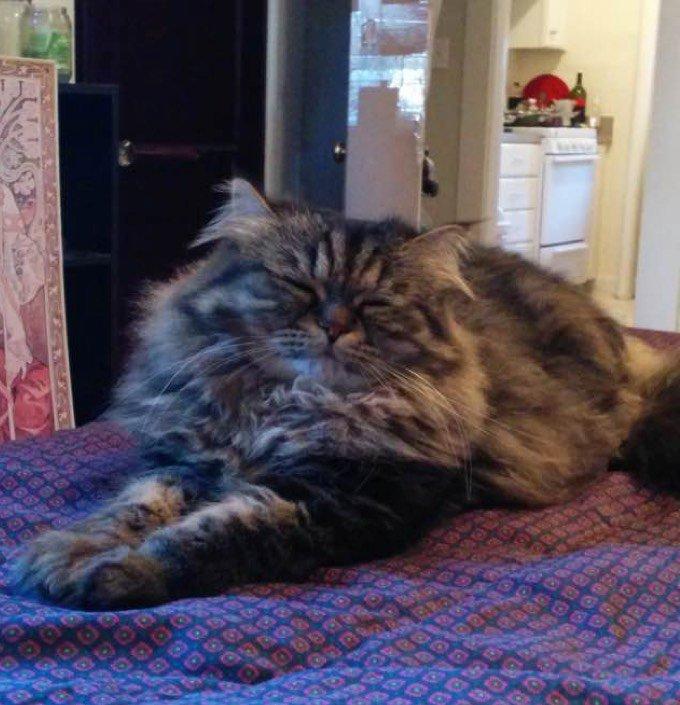 blog_yummypets_blake_rescue_cat_2_12_2015