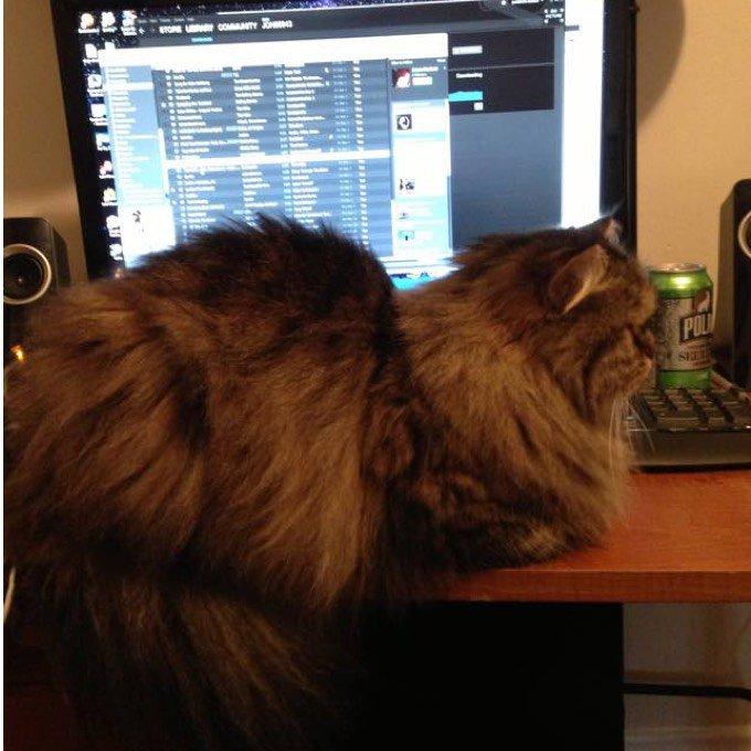 blog_yummypets_blake_rescue_cat_3_12_2015