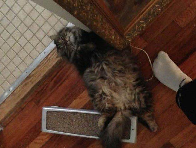 blog_yummypets_blake_rescue_cat_4_12_2015
