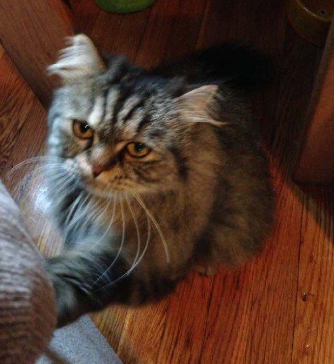 blog_yummypets_blake_rescue_cat_5_12_2015