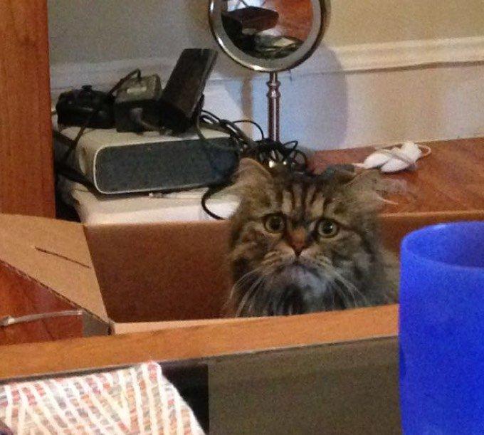 blog_yummypets_blake_rescue_cat_6_12_2015