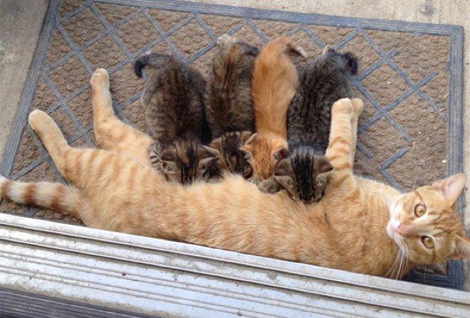 blog_yummypets_cat_families_03_12_2015