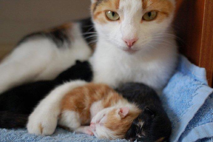 blog_yummypets_de_belles_photos_de_familles_felines_02_12_2015