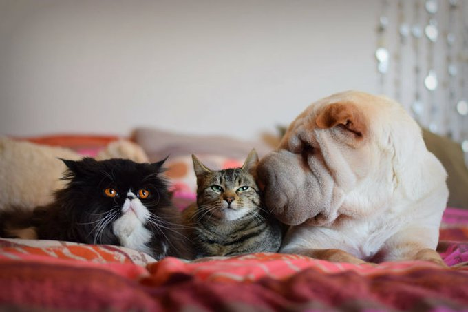 blog_yummypets_idees_cadeaux_chiens_chats_7_12_2015
