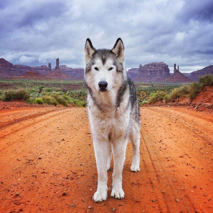 blog_yummypets_il_emmene_son_chien_dans_des_aventures_extraordinaires_02_12_2015
