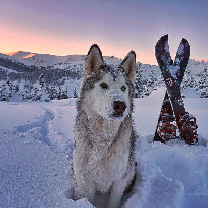 blog_yummypets_il_emmene_son_chien_dans_des_aventures_extraordinaires_07_12_2015