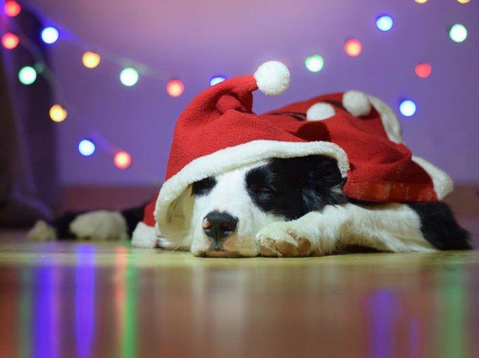 blog_yummypets_les_chiens_sont_prets_pour_les_fêtes_01_12_2015