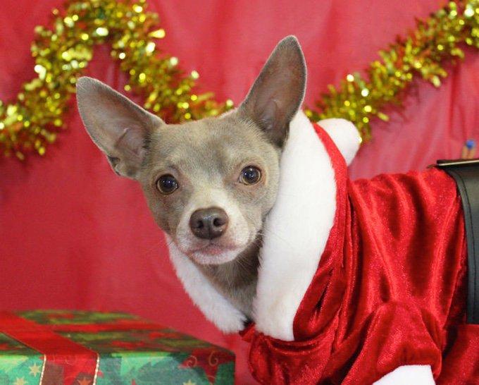 blog_yummypets_les_chiens_sont_prets_pour_les_fêtes_02_12_2015