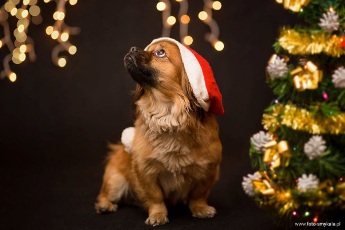 737daabaa0f22 ... for Christmas! blog_yummypets_the_festive_season_is_upon_us_02_12_2015.  blog_yummypets_the_festive_season_is_upon_us_03_12_2015