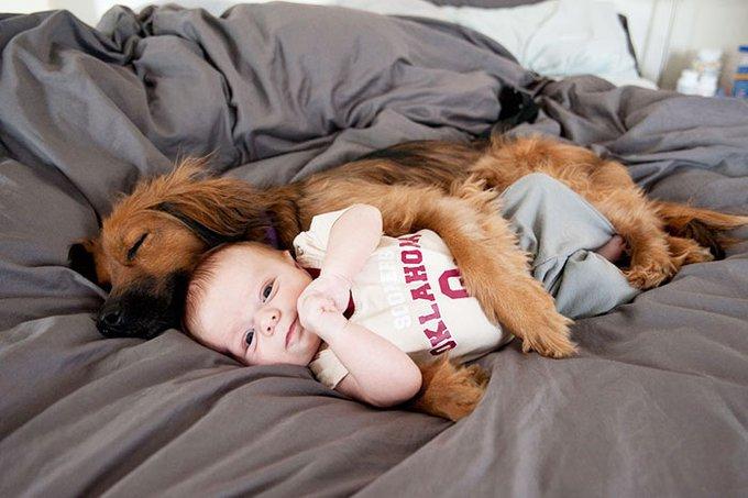 blog_yummypets_votre_enfant_a_besoin_dun_chien_10_12_2015