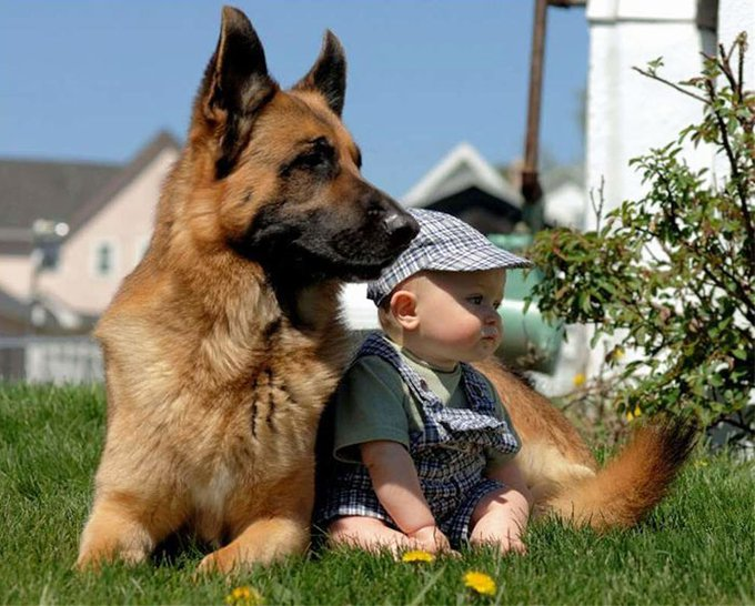 blog_yummypets_votre_enfant_a_besoin_dun_chien_13_12_2015