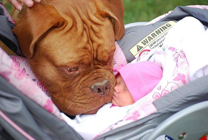 blog_yummypets_votre_enfant_a_besoin_dun_chien_4_12_2015