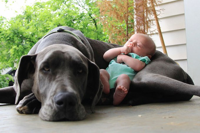 blog_yummypets_votre_enfant_a_besoin_dun_chien_7_12_2015