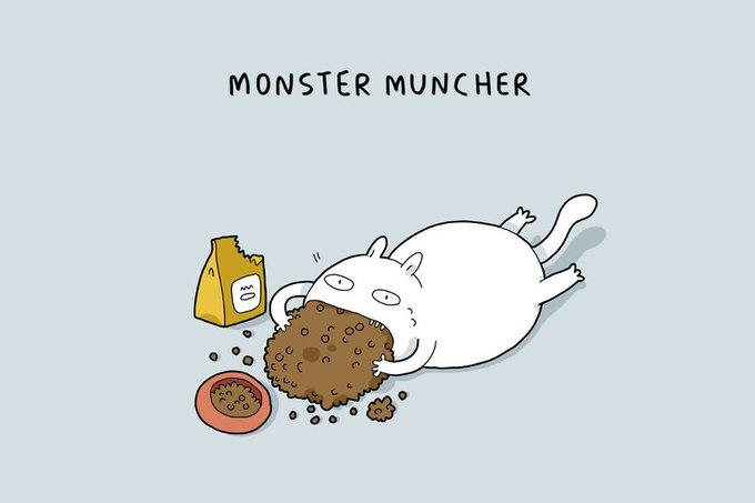 10 types de chats : le monstre mangeur