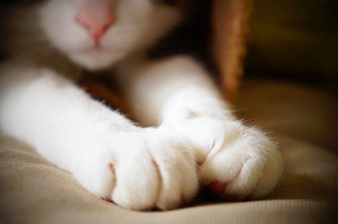 Les pattes du chat sont sensibles.