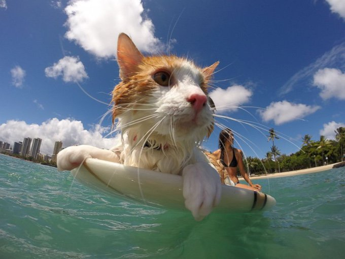 blog_yummypets_surfing_cat_02_01_2016