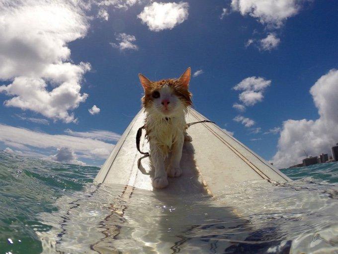 blog_yummypets_surfing_cat_03_01_2016