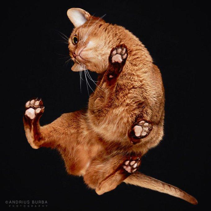 chat somali coussinet patte