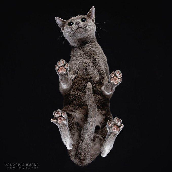 chat noir pattes coussinet