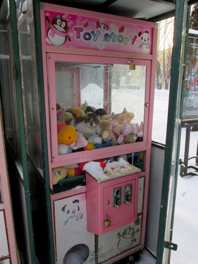 Chat coincé dans un jeu de foire en Serbie